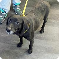 Adopt A Pet :: Echo - Rockville, MD