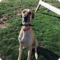 Adopt A Pet :: Lucy Turner - Urbana, OH