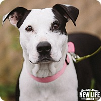 Adopt A Pet :: Lucy (foster) - Portland, OR