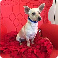 Adopt A Pet :: Azlan - San Francisco, CA