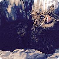 Adopt A Pet :: Avalon - Addison, IL