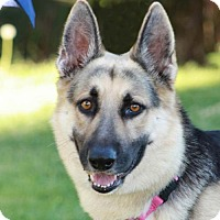 Adopt A Pet :: Amadeus - San Diego, CA