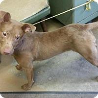 Adopt A Pet :: # 3 URGENT! - Carrollton, OH