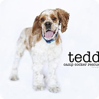 Adopt A Pet :: Teddy - Sherman Oaks, CA