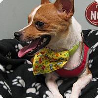 Adopt A Pet :: Rookie - Groton, MA