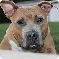 Adopt A Pet :: Trudy - Shrewsbury, NJ