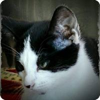 Adopt A Pet :: Murray - Pueblo West, CO