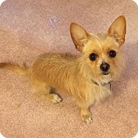 Adopt A Pet :: Marco - Duchess, AB