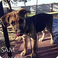 Adopt A Pet :: Sam - DeForest, WI
