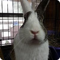 Adopt A Pet :: Cupid - Williston, FL