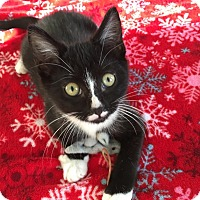 Adopt A Pet :: Johnny - Huntley, IL