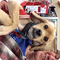 Dog Adoption Stafford Va