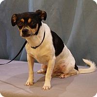Adopt A Pet :: Butch - Maynardville, TN