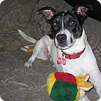 Adopt A Pet :: Clarissa - Tampa, FL