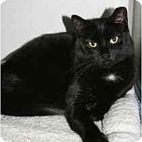 Adopt A Pet :: Violet - Marietta, GA
