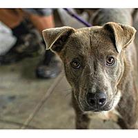 Adopt A Pet :: Ninja-PENDING ADOPTION - Lancaster, PA
