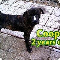 Adopt A Pet :: Cooper - Boaz, AL