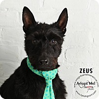Adopt A Pet :: Zeus-Pending Adoption - Omaha, NE