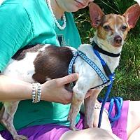 Adopt A Pet :: Jasper (6 lb) - Sussex, NJ