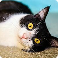 Adopt A Pet :: Sparkles - Larned, KS