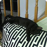 Adopt A Pet :: Bandit - Stafford, VA