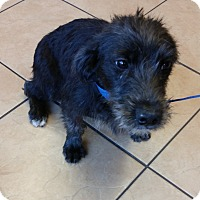 Adopt A Pet :: Kelby - Murrells Inlet, SC