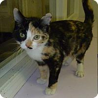 Adopt A Pet :: Jezabelle - Hamburg, NY