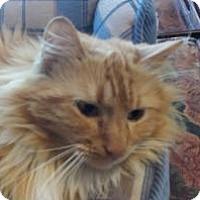 Adopt A Pet :: Pippin - Ennis, TX