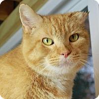 Adopt A Pet :: Pumpkin - Winston-Salem, NC