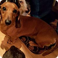 Adopt A Pet :: Cashew - Andalusia, PA