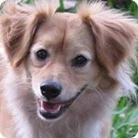 Adopt A Pet :: Blaze! - St Petersburg, FL