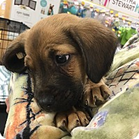 Adopt A Pet :: Chunky - Rosamond, CA