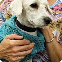 Adopt A Pet :: Frankie - Oakley, CA