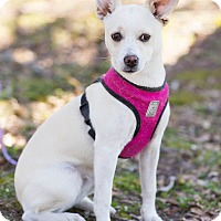 Adopt A Pet :: Abby - Conyers, GA