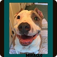 Adopt A Pet :: Miracle-BLIND - Memphis, TN
