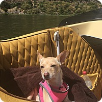 Adopt A Pet :: Maisy - San Francisco, CA