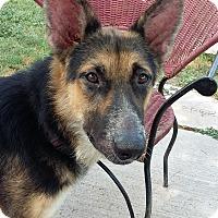 Adopt A Pet :: Samantha - Brownsville, TX