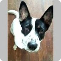 Adopt A Pet :: Max - Pittsboro, NC