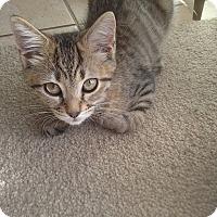 Adopt A Pet :: Hermine - Tampa, FL