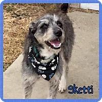 Adopt A Pet :: Sketti - Jasper, IN