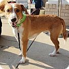 Adopt A Pet :: Aries