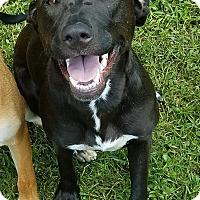 Adopt A Pet :: A - SISSY - Seattle, WA