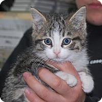 Adopt A Pet :: Jelly - Brooklyn, NY