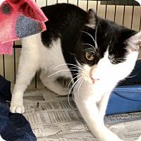 Adopt A Pet :: Alina - Island Park, NY