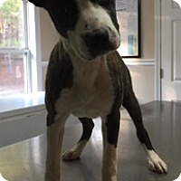 Adopt A Pet :: 6098 - Calhoun, GA