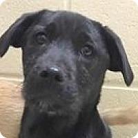 Adopt A Pet :: Ritchie - Springdale, AR