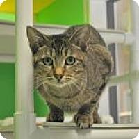 Domestic Shorthair Cat for adoption in Suwanee, Georgia - Ruby
