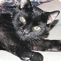 Adopt A Pet :: Armena - Kalamazoo, MI