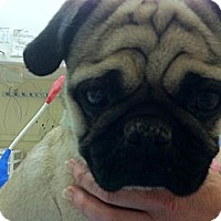 Adopt A Pet :: Max - Poway, CA