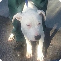 Adopt A Pet :: Bryan -FOSTER NEEDED - Seattle, WA